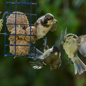 Aggressive Birds At Bird Feeder