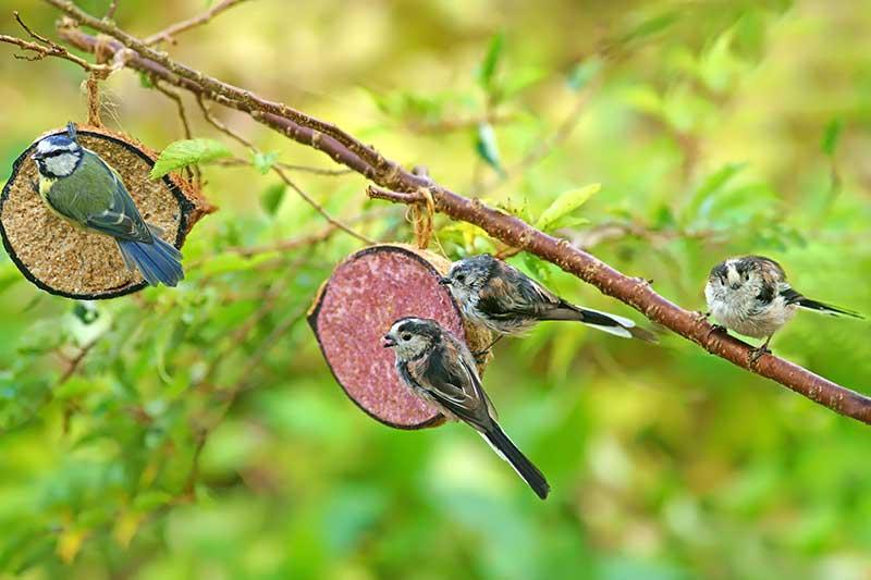 Garden Birds At A Feeder
