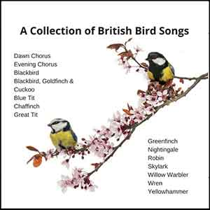 A Collection Of British Bird Songs