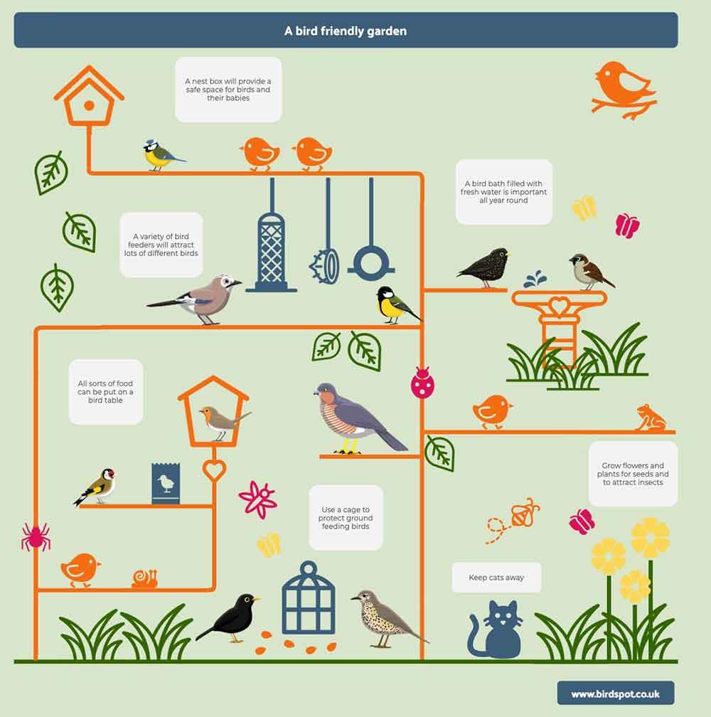 Bird Friendly Garden Infographic