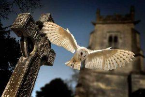 Barn Owl At Night