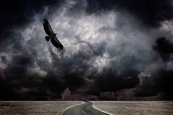 Bird In A Storm