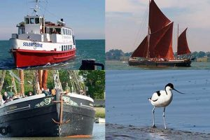 Bird Watching Cruises