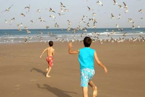 Birds At The Beach