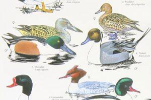 Birds Wall Chart