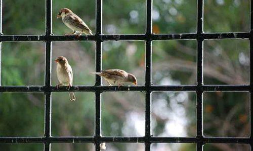 Birds On A Window Frame