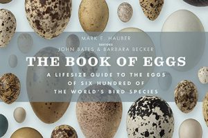 Books About Birds' Eggs And Nests