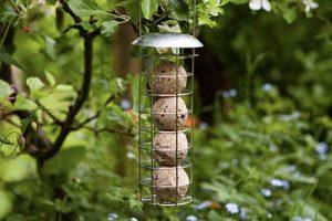 Chapelwood Bird Feeder