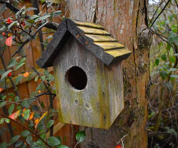 Empty Bird Box