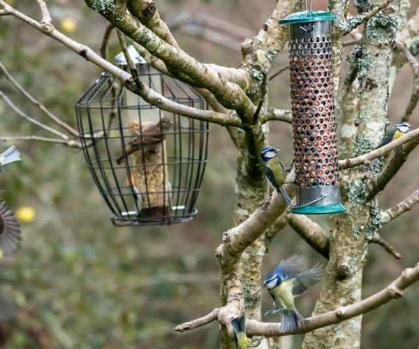 Garden Birds At Feeders