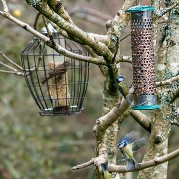 Garden Birds At Feeders