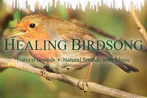 Healing Birdsong