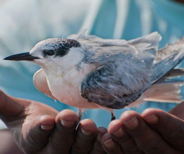 Bird In Hands