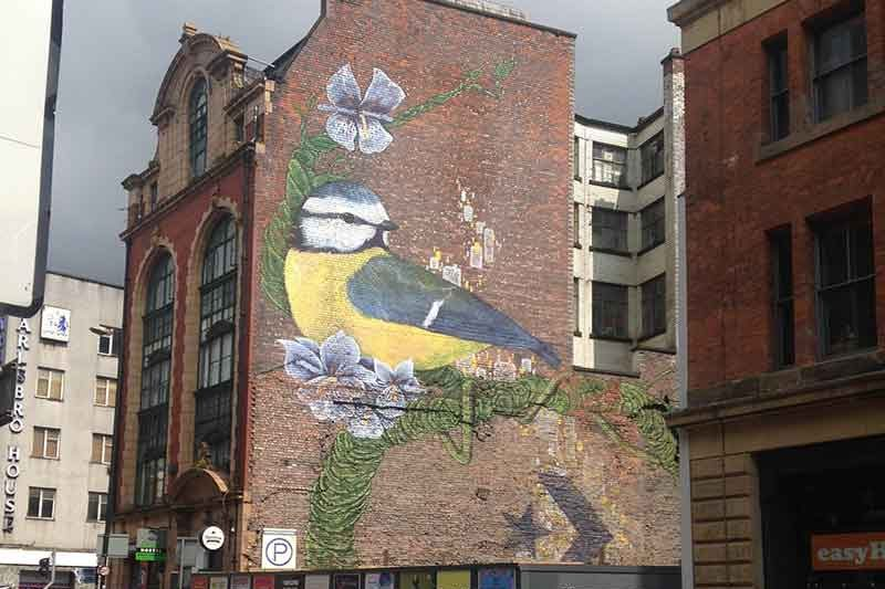 Manchester Blue Tit