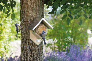 Peanut Butter For Birds