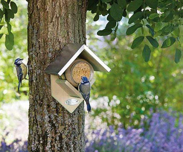 Peanut Butter For Birds