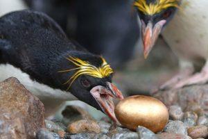 Penguin And Golden Egg