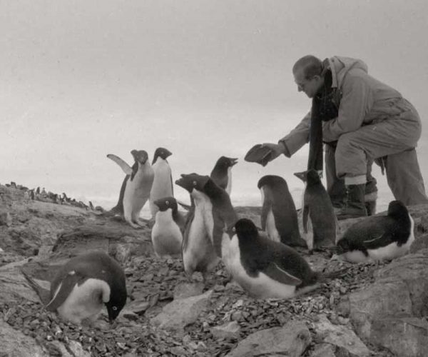 Prince Philip With Adelie Penguins