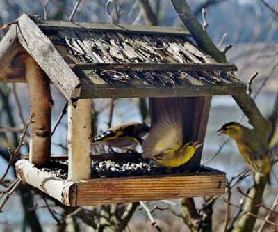 Rustic Wooden Bird Table