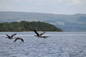 Bird Watching Holidays In Scotland