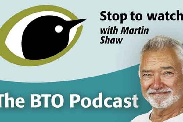 Stop To Watch BTO Podcast