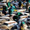 Twack Of Ducks